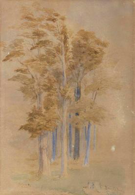 Totara and Pine, Baigent's Bush, Wakefield