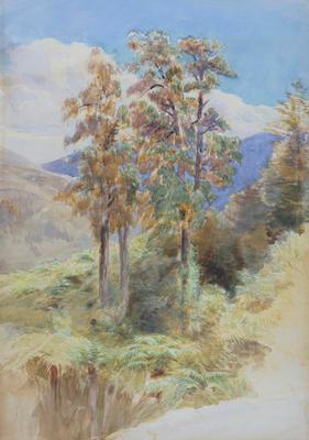 Rimu Trees - Riwaka
