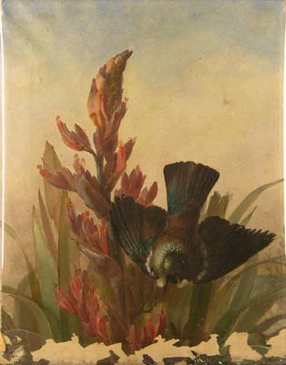 Tui Birds