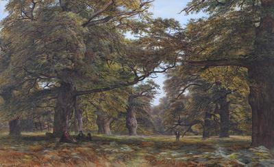 Beech Forest, England 1877