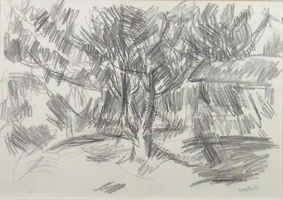 Magnolia Tree in Moonlight, Greymouth
